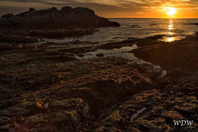 Point-Lobos-1-3-14-66-Edit.jpg
