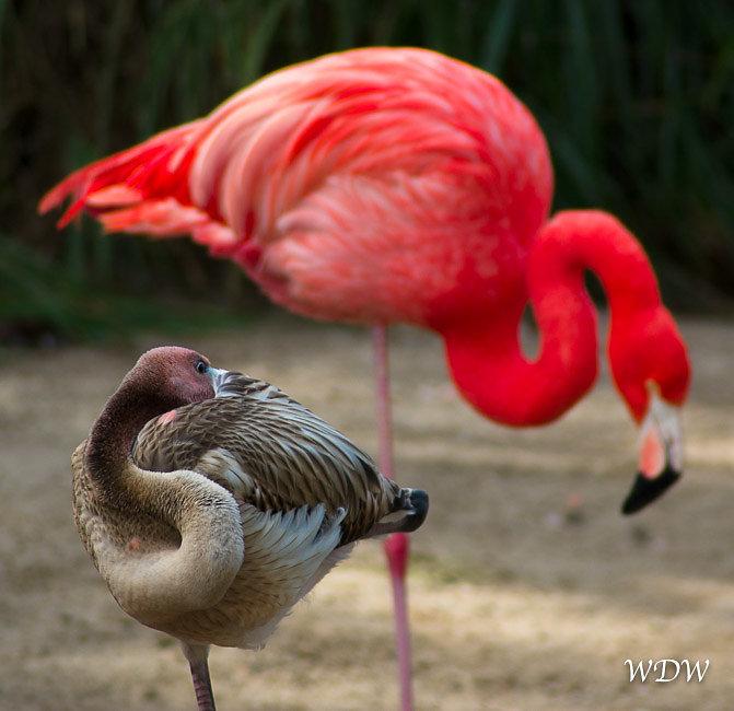 San Diego Zoo Album