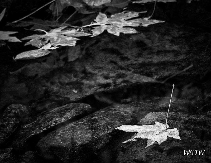 Yosemite-11-6-10-103-Edit-3.jpg