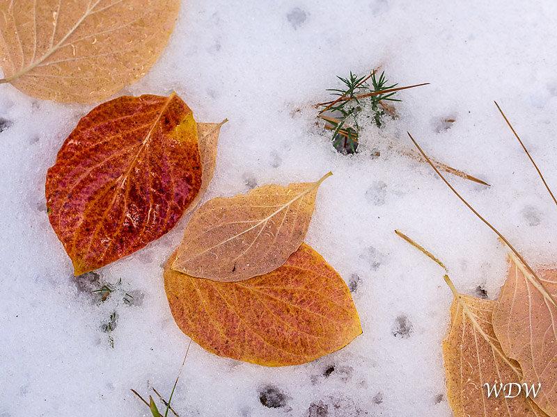 Yosemite-11-10-12-276.jpg