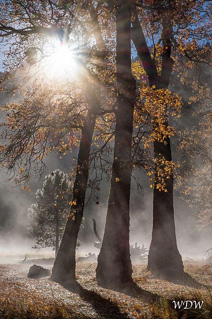 Yosemite-11-14-14-130-Edit.jpg